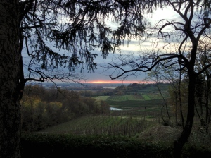 A view from the top of the vineyard looking south towards the Adriatic.